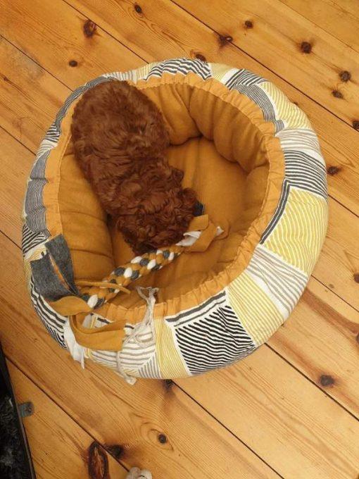 Mysbubbla 17. Här ligger det en brun hund i hundbädden