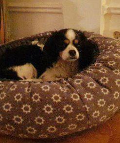 En lite hund som ligger i sin hundbädd, nummer 63