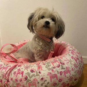 Hundbädd med matchande hundhalsband med koppel till Gullan